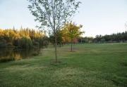Network Real Estate - Meadow Vista 6 (Custom)